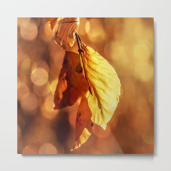 Autumn in Fire Metal Print
