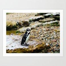 Penguin stare Art Print