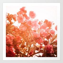 oleander series // no. 4 Art Print