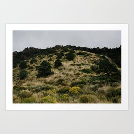 Hill of Green in Big Bend National Park, TX Art Print