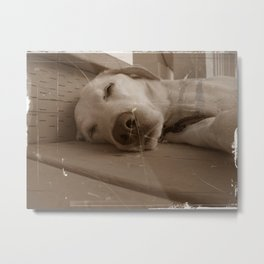 Willy the Dog Metal Print