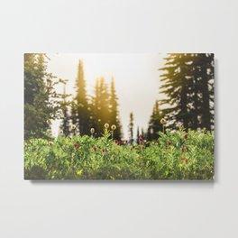 Mountain Meadow Flowers - 13/365 Metal Print