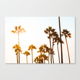 Venice Palms Canvas Print