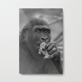 Gorilla Eating A Salad Metal Print