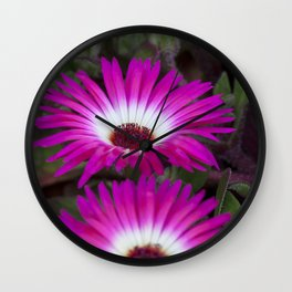 Livingstone daisies pink and white Wall Clock