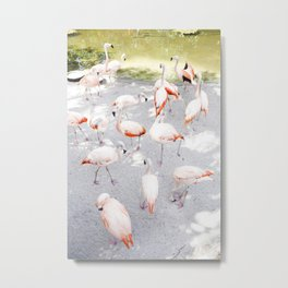 Pretty in Pink     Flamboyance of Flamingos Metal Print