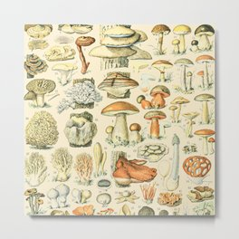 Mushroom Diagram // Champignons II XL by Adolphe Millot 19th Century Science Textbook Artwork Metal Print