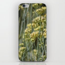 Desert Milkweed Sunnyland Estates Rancho Mirage California iPhone Skin