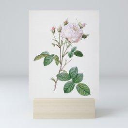 Vintage White Provence Rose Illustration Mini Art Print