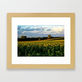 Summer sunflower field Framed Art Print