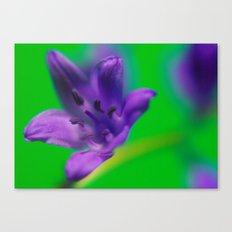 Purple & Green Canvas Print