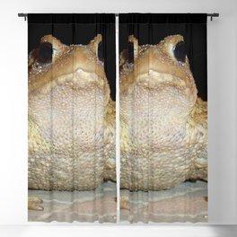 Common European Toad Blackout Curtain