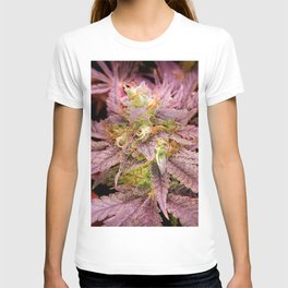Passionately Purple T-shirt