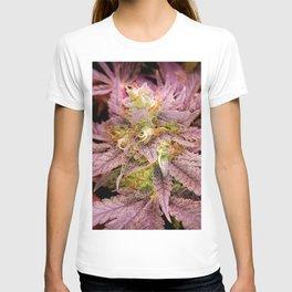 Passionately Purple T-shirt