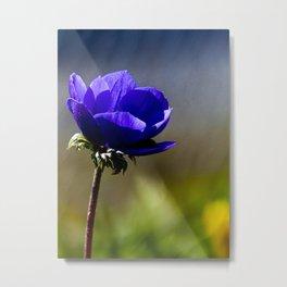 The blue Flower Metal Print