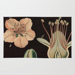 Botanical Almond Rug