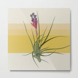 Blooming Tillandsia Metal Print