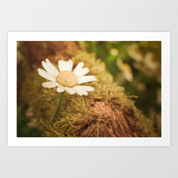 Daisy nature Art Print