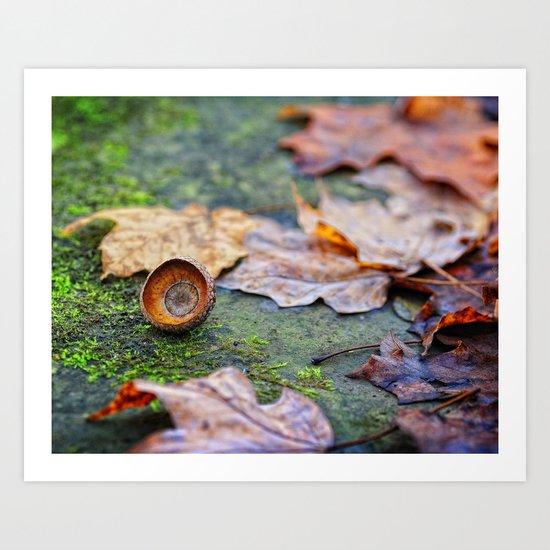 Shaking down the acorns Art Print