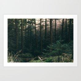 COLD PINES Art Print