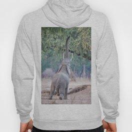 Elephant reaching for Acacia tree Hoody