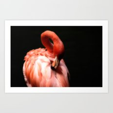 Flamingo Softness Art Print