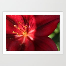 Red Lilly  Art Print