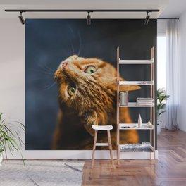 Ginger kitty cat Wall Mural