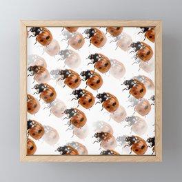 Ladybirds  Framed Mini Art Print