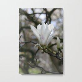 real magnolias Metal Print