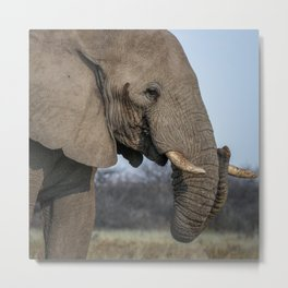 Elephant 8 Metal Print