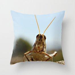 small grasshopper, bug, grasshopper, nature, smart, wisdom, freedom, spectator, yard, photography,  Throw Pillow