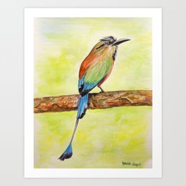 Turquoise Browed Motmot — National Bird of El Salvador Art Print