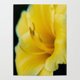Day Lily-4 Poster