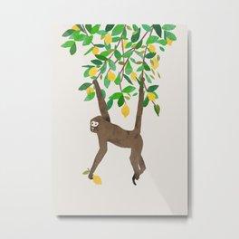 Monkey on lemon tree Metal Print