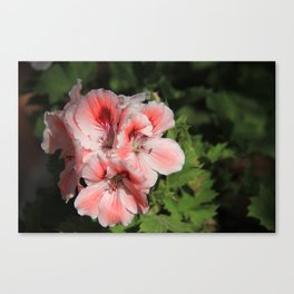 more from israel Canvas Print