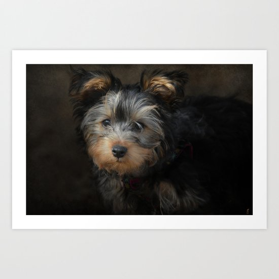 Yorkshire Terrier Puppy Portrait Art Print