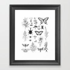 Naturalist Framed Art Print