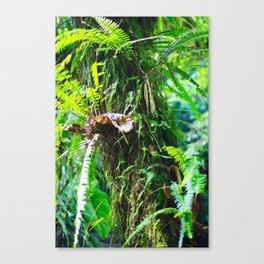 Jungle tree Canvas Print