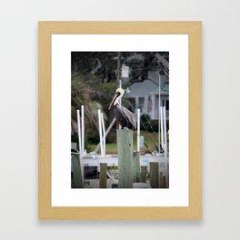 Adult Brown Pelican Framed Art Print