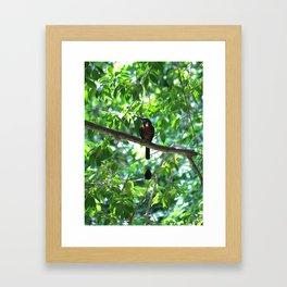 Cenote Squabbler Framed Art Print