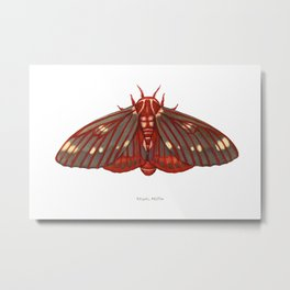 Regal Moth Metal Print
