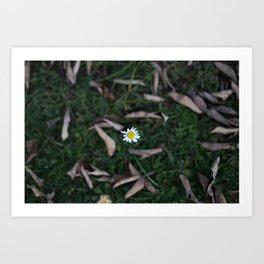 The Lone Flower Art Print
