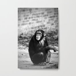 Ape or Trait? Metal Print