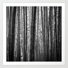 Bamboo Monochrome Art Print
