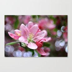 Spring blossoms Canvas Print