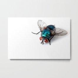 Blowfly Metal Print
