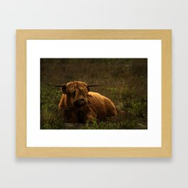 Scottish Highland hairy cow Framed Art Print