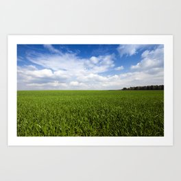 cereal field.  Agricultural Art Print