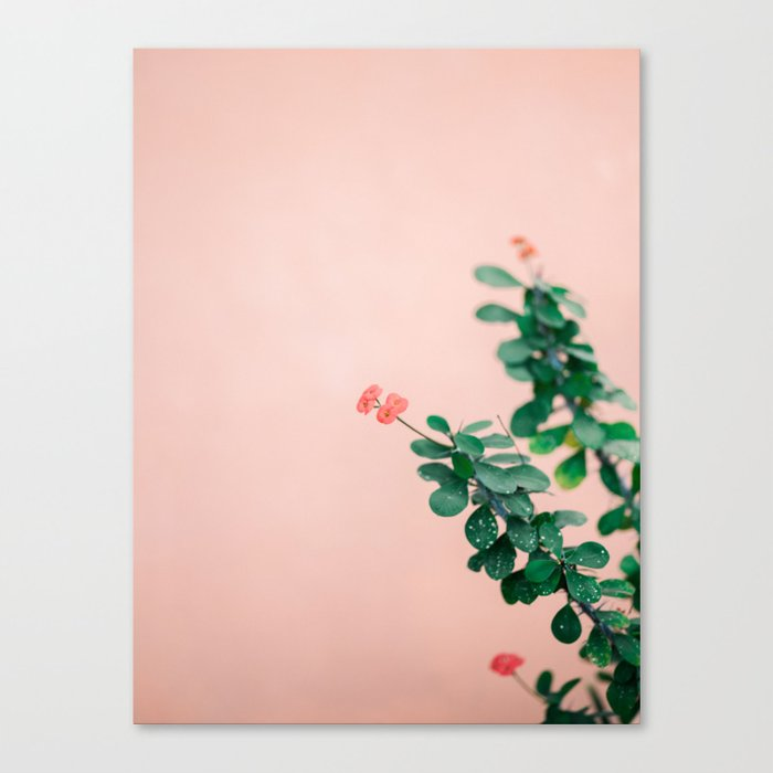 Floral photography print   Green on coral   Botanical photo art Canvas Print